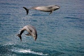 Dumaguete Dolphin Watching & Manjuyod Sandbar