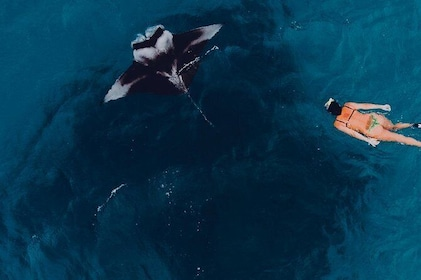 Snorkeling with Manta Ray