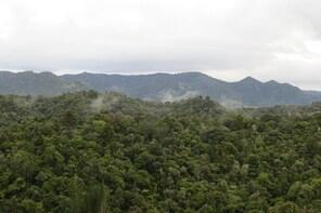Full-Day Rainforest Getaway in Northland