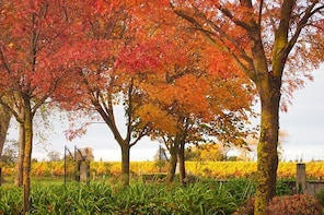 Private Tour: Winter Wine and Scenic Delights Tour from Blenheim