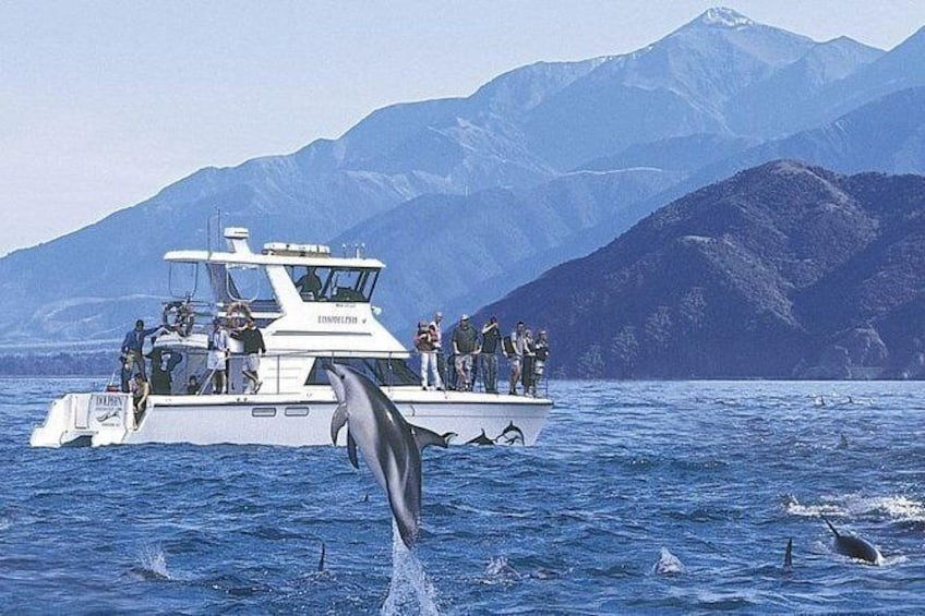 Show item 1 of 6. Kaikoura Swim with Dolphins Tour from Christchurch