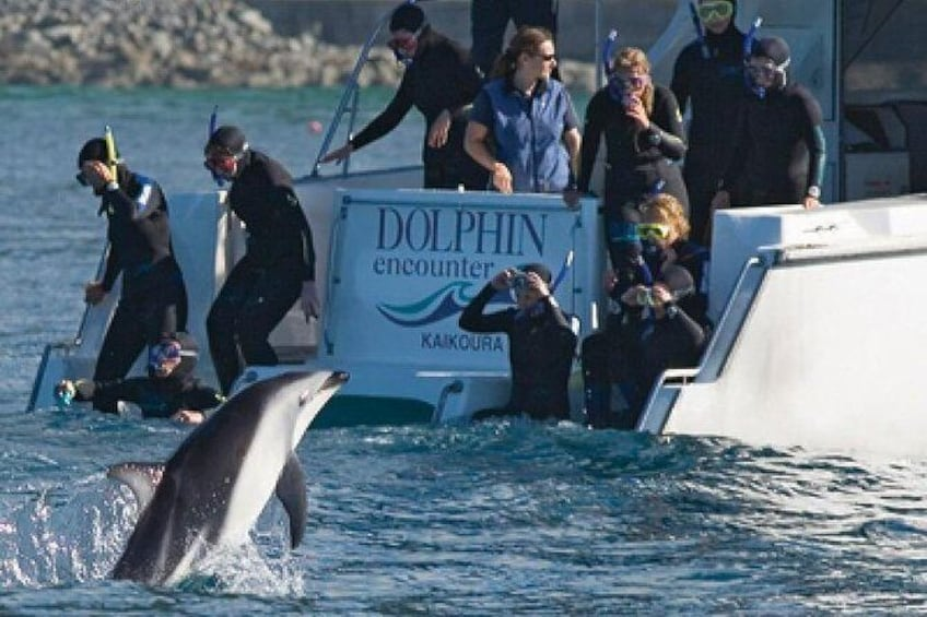 Show item 2 of 6. Kaikoura Swim with Dolphins Tour from Christchurch