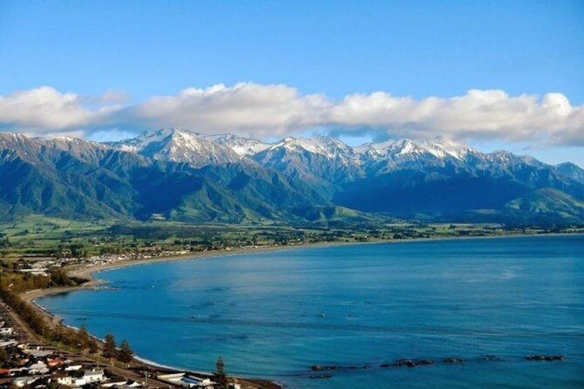 Show item 6 of 6. Kaikoura Swim with Dolphins Tour from Christchurch