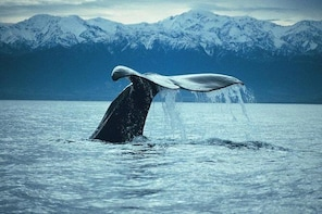 Kaikoura Whale Watch Day Tour from Christchurch