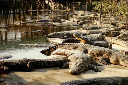 Melaka Crocodile Farm Admission Tickets