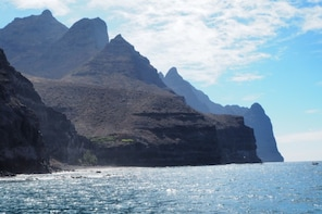 Dolphin watching & Coastal Catamaran Sailing Cruise