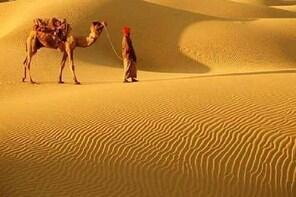 A Camel Safari Through The Thar Desert Sand Dunes Near Bikaner