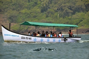 Small Group Dolphin Watching Expedition In Goa- South