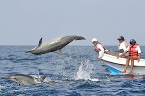 Small Group Dolphin Watching Expedition In Goa - North