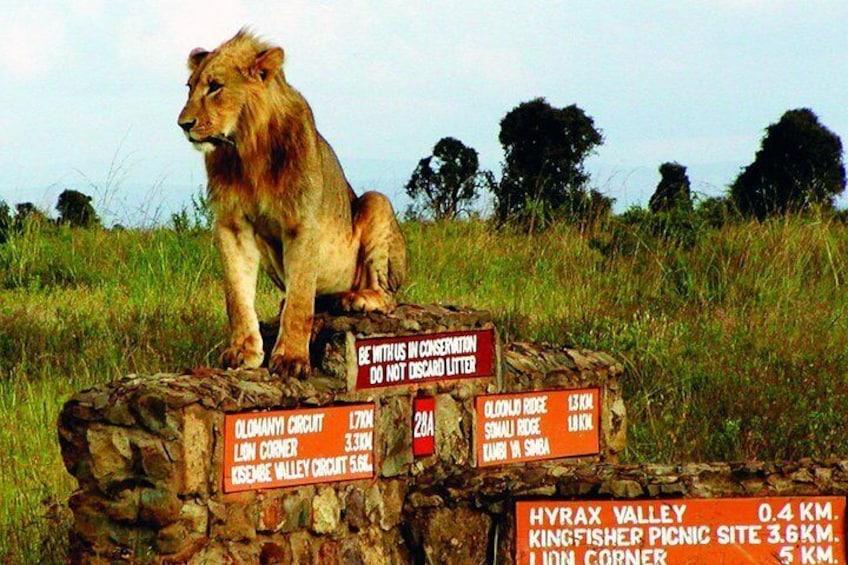 Nairobi National Park game drive