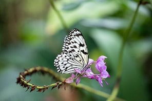 The Cockrell Butterfly Center Admission in Houston