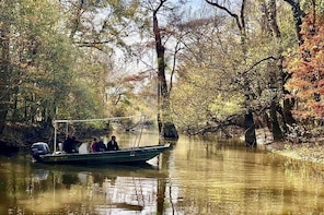 Maurepas Swamp Tour, Small-Group Ecotour