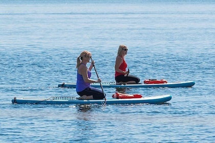 Dolphin and Manatee Stand Up Paddleboard Tour