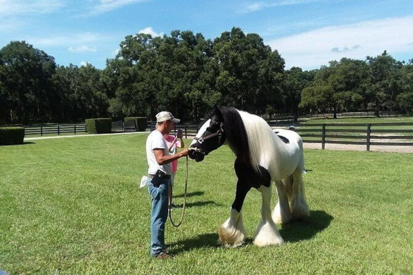 Show item 4 of 8. Skip the Line: Gypsy Gold Horse Farm Tour Ticket