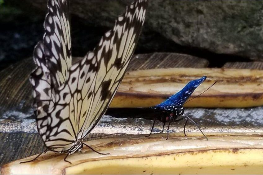 Butterfly Rainforest at Florida Museum of Natural History Ticket