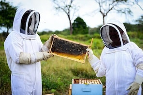 Cayman Honey Beekeeping Adventure