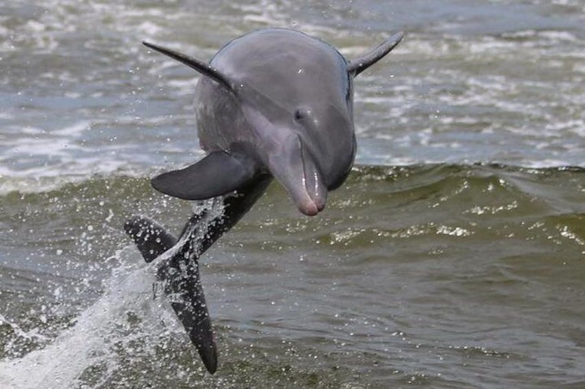 Experience Dolphins in the Wild!