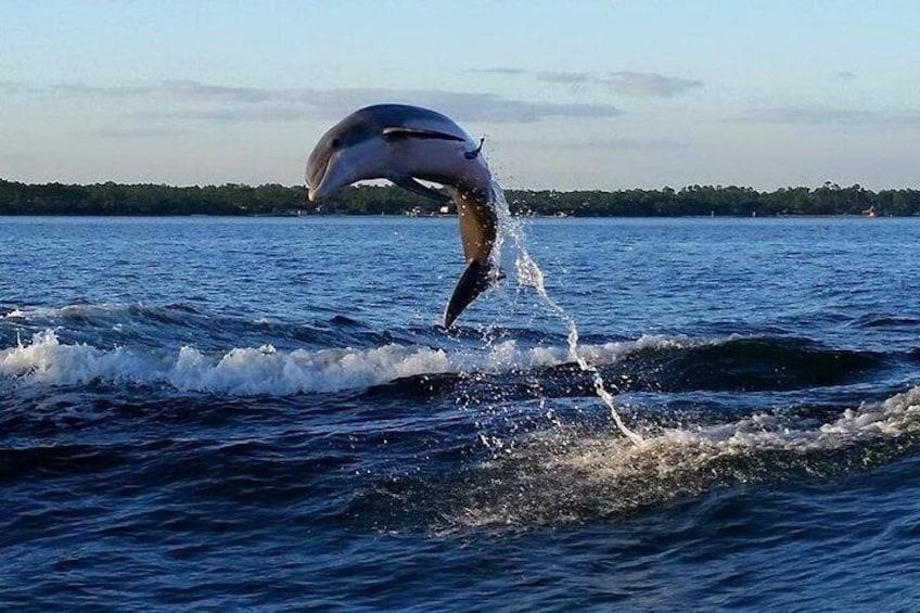Show item 3 of 10. Alabama Gulf Coast Dolphin Cruise