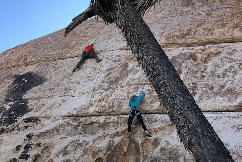 Show item 1 of 8. Beginner Group Rock Climbing in Joshua Tree National Park