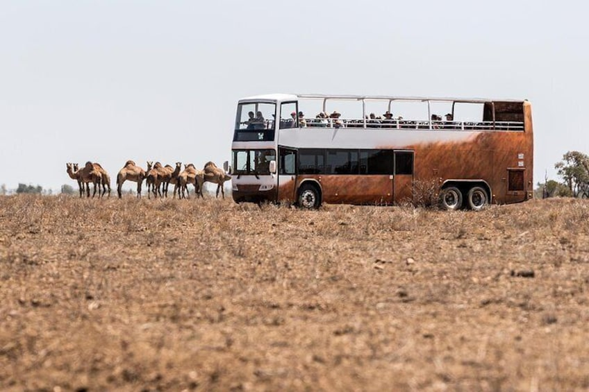 Board our open-top overlander safari bus to get up close to the animals