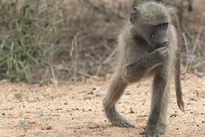 Kruger National Park Day Trip