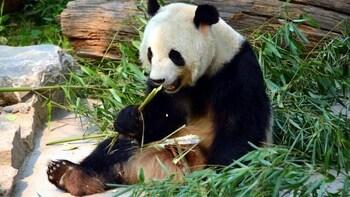 Beijing Zoo Entrance Ticket