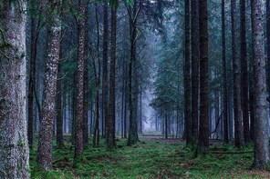 The Witch Tour: Appalachian Mountains Ghost Tour