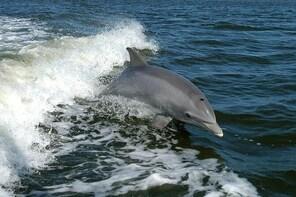 90 Minute Dolphin Tour