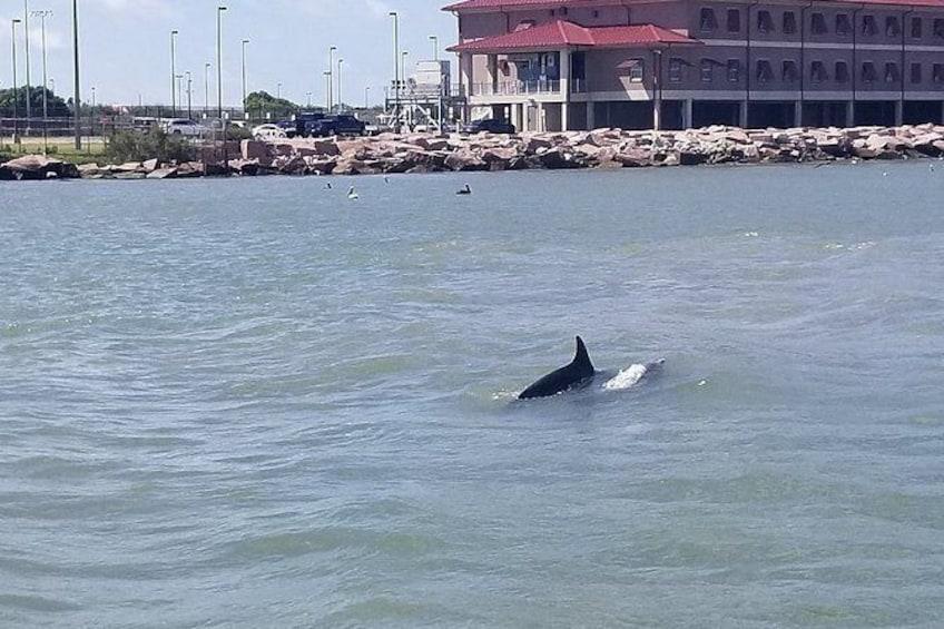 Show item 2 of 9. Galveston Dolphin Sightseeing Tour