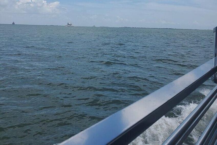 Show item 3 of 9. Galveston Dolphin Sightseeing Tour