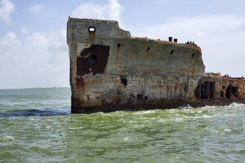 Dolphin Sightseeing Tour in Galveston with a Guide