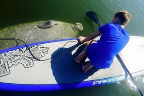 Paddle Board or Kayak Eco Dolphin Manatee Tour