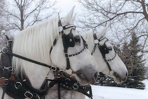 Small Private Sleighride