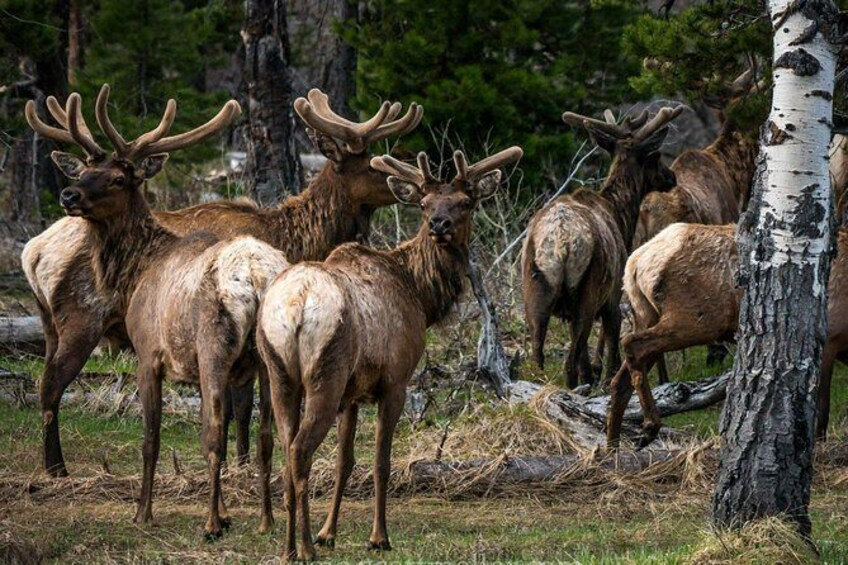 Show item 4 of 6. Scenic Sunrise Tour of Grand Teton National Park