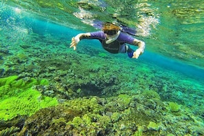 Snorkelling in Crystal Clear Water