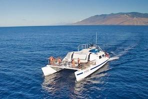 Molokini and Turtle Town Snorkeling Adventure Aboard Malolo from Ma'alaea H...