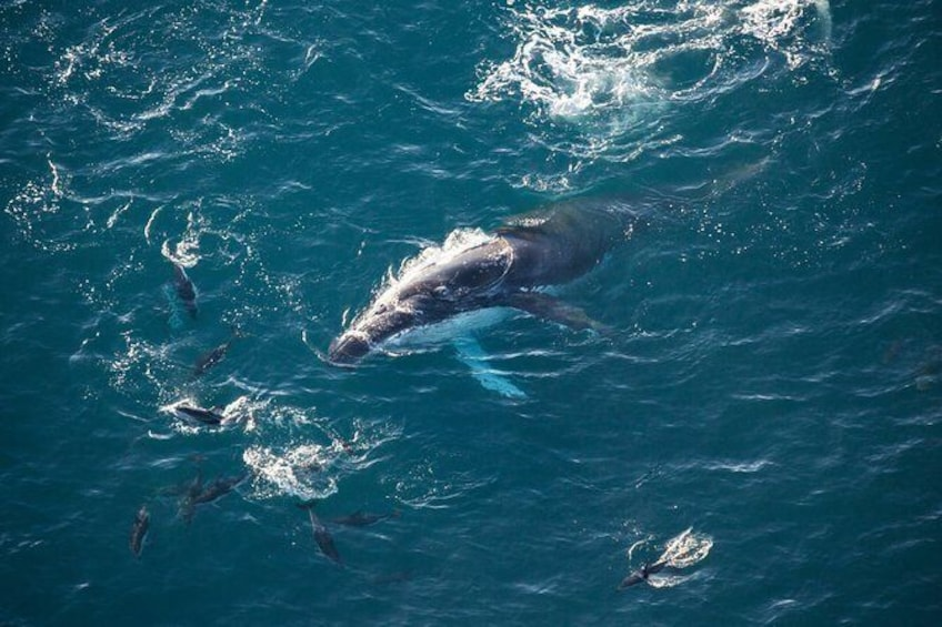 Show item 1 of 5. Ocean Safari Heli-Whale Watch