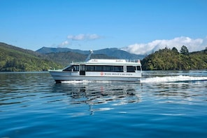 Half-Day Cruise in Marlborough Sounds from Picton