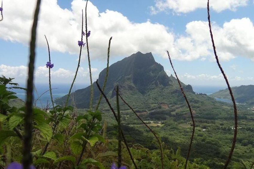 Show item 1 of 5. Moorea Three Coconuts Trail Guided Hike