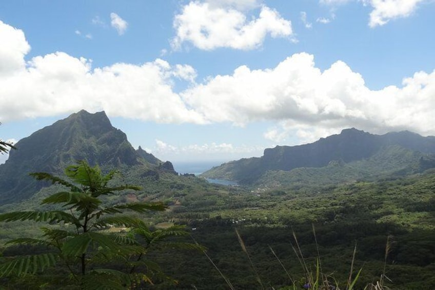 Show item 5 of 5. Moorea Three Coconuts Trail Guided Hike