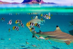 Full-Day Bora Bora Lagoon Cruise Including Snorkeling with Sharks and Sting...
