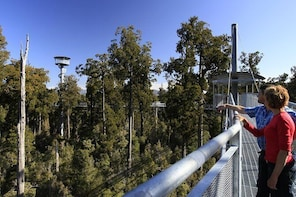 West Coast Tree Top Walk Experience