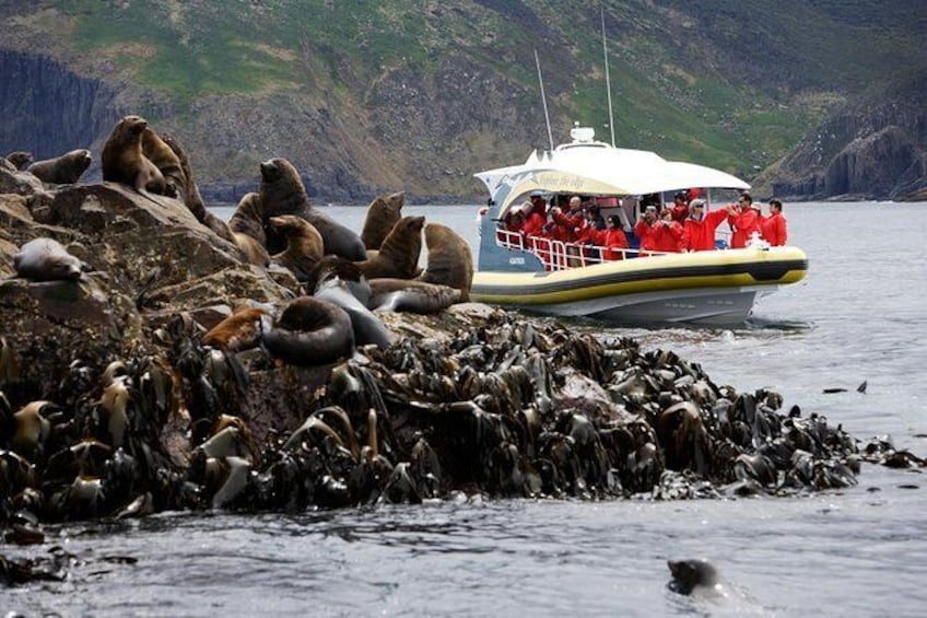 3-Hour Bruny Island Cruise from Adventure Bay