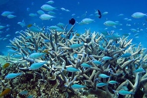 Great Barrier Reef Dive and Snorkel Cruise from Townsville or Magnetic Isla...