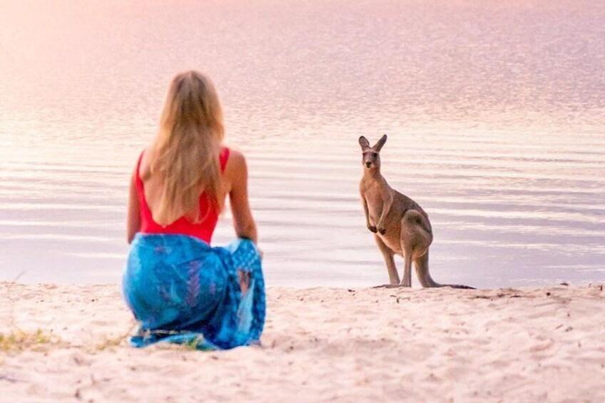 Kangaroo at Lake Cootharaba