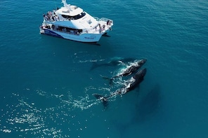Hervey Bay Whale Watching Experience