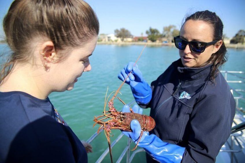 Meeting the on board lobsters