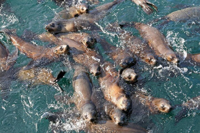 Seals come up to the boat