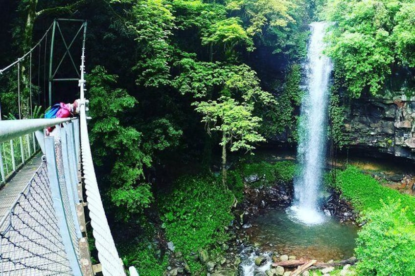 Show item 1 of 10. Rainforest & Waterfall Experience