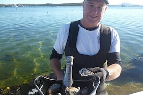 Oyster Farm and Tasting Tour with Hotel Pick-up and return from Port Lincol...